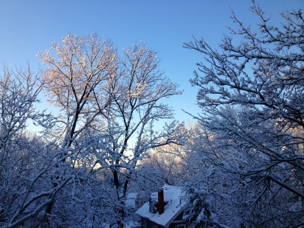 Winter view from my window