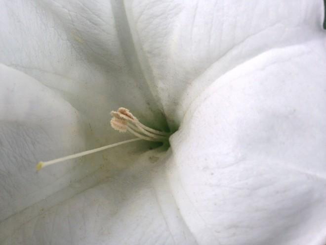squash blossom closeup