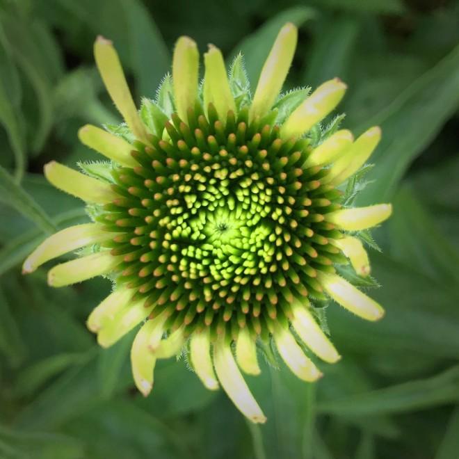 photo of budding flower