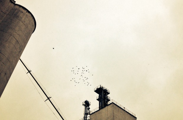 photo of birds on a bleak sky and grain elevators