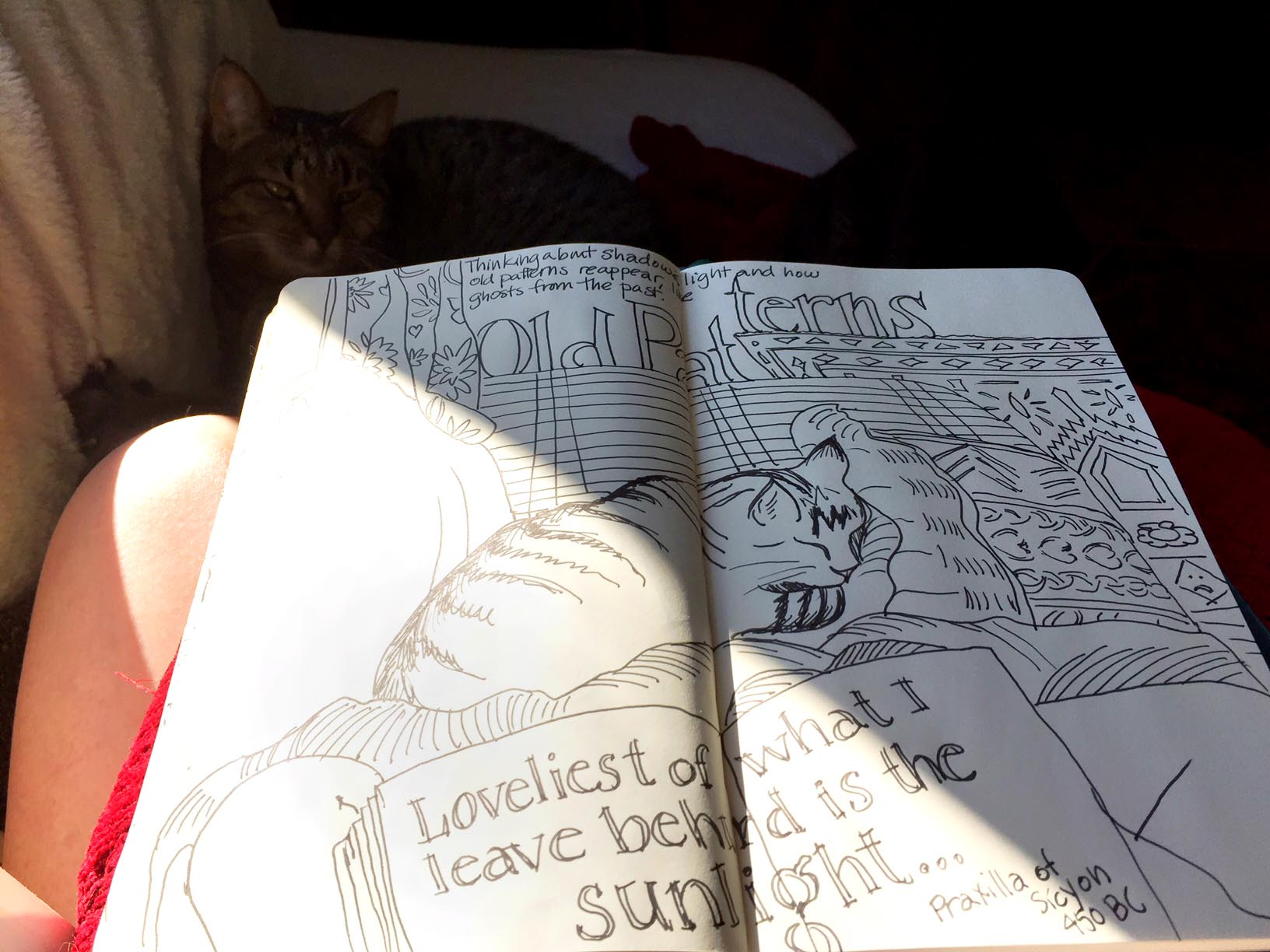 sunny day with image of sketchbook showing a drawing of a cat