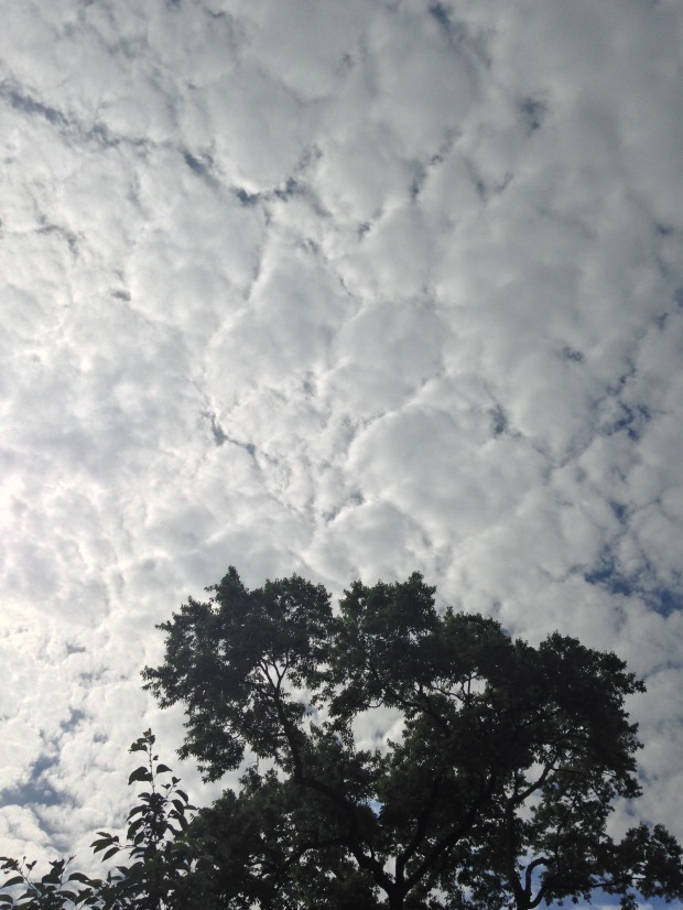 summer sky with dense clouds